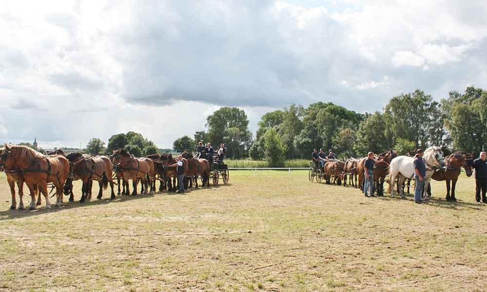 8. Reit- und Fahrturnier in der Stadt Usedom 2017